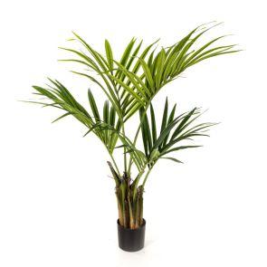 Natural Kentia Palm, H: 110cm