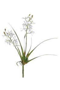 Cattleya wit, H: 40cm