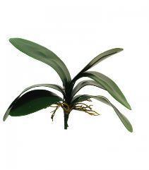 Orchideeblad, H: 29cm