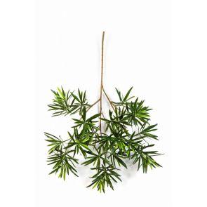 Podocarpus blad, H: 66cm