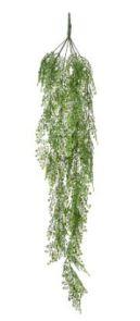 Adianthum hanging bush, H: 105cm