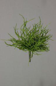 Orchidee wortel Groen