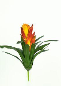 Guzmania oranje / geel
