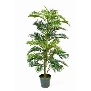 Areca palm in pot, H: 150cm