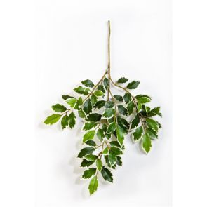 Ficus Folia spray bont, L: 48cm