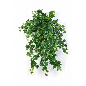 Mini english ivy