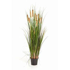 Cattail Gras, H: 120 cm