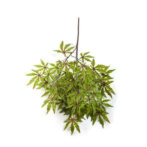 Japanese Maple Groen / Rood, L: 63cm