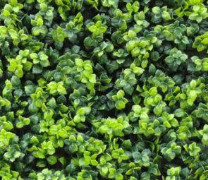 Leucadendron Groen, B: 50 cm, L: 50cm, UV & Waterproof