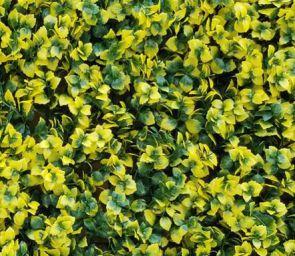 Leucadendron Geel, B: 50 cm, L: 50 cm, UV & Waterproof