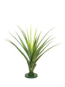 Ananas Pandanusbladplant, H: 95cm
