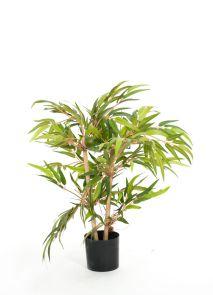 Bamboe x 4, H: 90cm