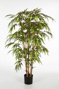Bamboe x 5, H: 120cm