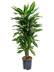 alle levende planten