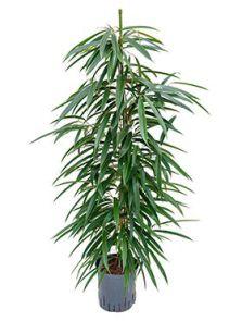 hydrocultuur planten