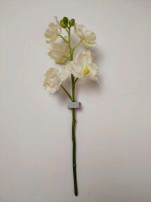Orchidee wit, H: 45 cm - Uitlopend