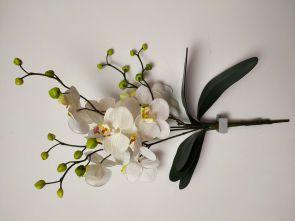 Orchidee wit met blad, H: 50cm