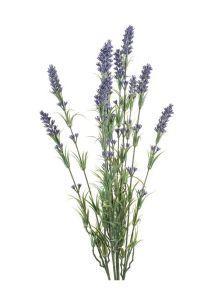 Lavender Bush, H: 45cm