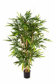 Bamboe de Luxe, H: 270cm