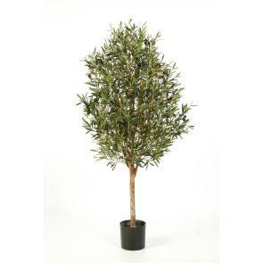 Olijfboom, H: 170cm