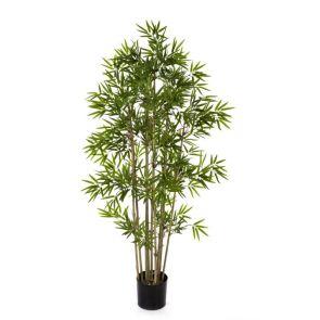Japanese bamboo, H: 140cm