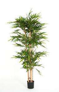 Bamboe de Luxe, H: 180cm