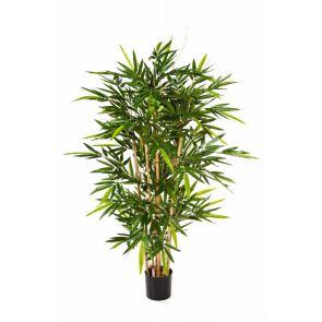 Bamboe de Luxe, H: 210cm