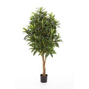 Croton Goldfinger Groen x 125