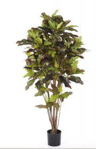 Croton tree Bont, H: 120cm