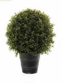 Buxus, diam. 30 in pot - UV & Waterproof