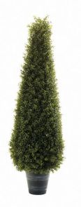 Buxus Pyramide op stam, H: 170cm