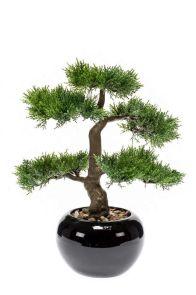 Bonsai Cedar in zwarte schaal, H: 34cm