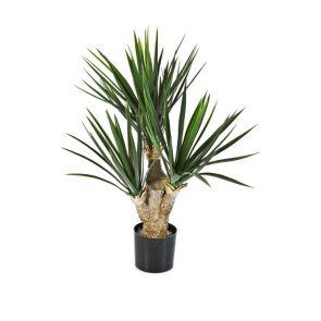 Yucca, 3 koppen, 68 cm