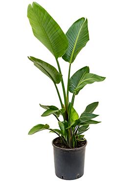 aarde planten