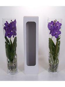 Vanda conische vaas mix, Vanda in conische vaas, H: 70cm, B: 26cm, potmaat: 17cm