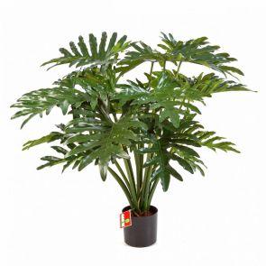Philodendron Bush, H: 90cm
