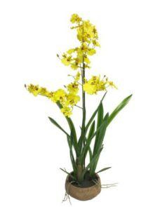 Oncidium Malibu in pot yellow 90cm
