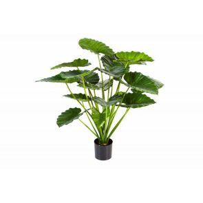 Alocasia Calidora Bush, H: 95cm