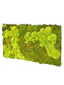 BioMontage, Acoustic Moss Panel 50% Flatt- 50% Pillowmoss, L: 120cm, H: 5cm, B: 58,5cm