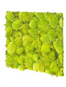 BioMontage, Acoustic Moss Panel 100% Pillowmoss, L: 58,5cm, H: 5cm, B: 58,5cm