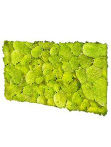 BioMontage, Acoustic Moss Panel 100% Pillowmoss, L: 120cm, H: 5cm, B: 58,5cm