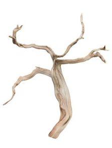 Decowood, Ghostwood sandblasted branchy, L: 40cm