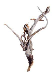 Decowood, Ghostwood raw, L: 75cm