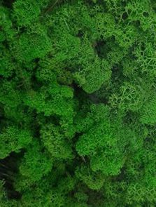 Rendiermos, Licht Gras Groen (ca. 0,45 m²)