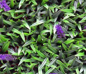 Leliegras Liriope met bloem, B: 50cm, L: 50cm, UV & Waterproof