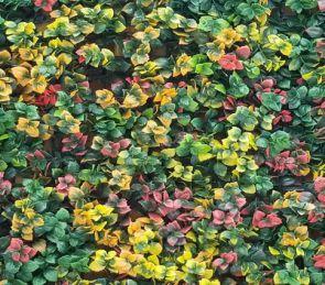Leucadendron Multicolor, B: 50 cm, L: 50cm, UV & Waterproof