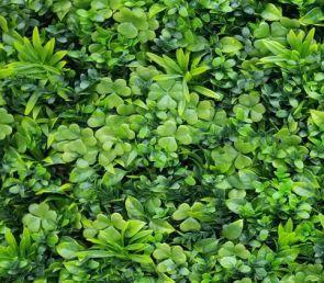 Vegetatie grof blad, Sedum