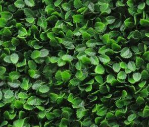 Beuken Fagus Sylvatica, B: 50cm, L: 50cm, UV & Waterproof