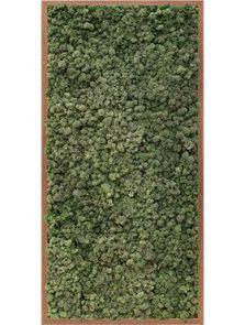 Mos schilderij, Meranti 100% rendiermos (donker groen), L: 60cm, H: 6cm, B: 120cm