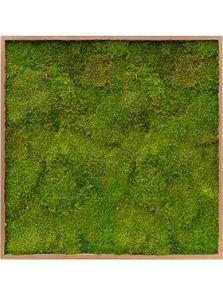 Mos schilderij, Bamboe 100% platmos, L: 100cm, H: 6cm, B: 100cm